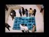 Krista-Nassi-Aquarium-2